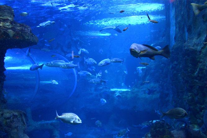 aquarium san sebastian près camping hendaye