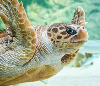 camping proche aquarium de Biarritz