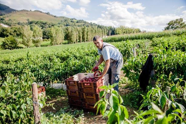 environnement naturel pays basque camping