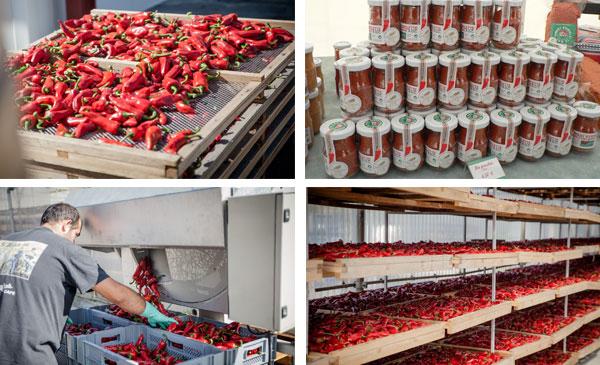 production piments près camping ametza